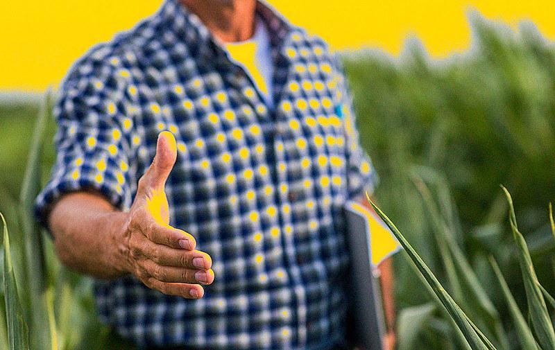 O brancos são maioria no cultivo de soja, café, cana-de-açúcar, criação de bovinos, produção de sementes certificadas e aquicultura