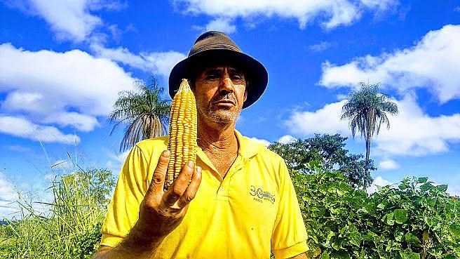 Acampamento Dom Tomás Balduíno, na cidade de Formosa, em Goiás, já garantiu a colheita de milho, feijão e outros grãos