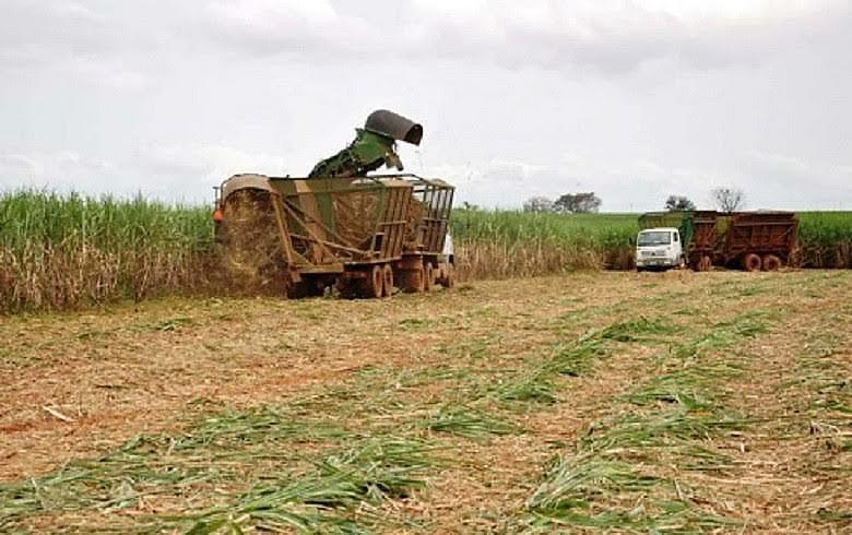 Agrotóxicos usados na monocultura da cana em SP elevam índices de adoecimento entre os agricultores e toda a população