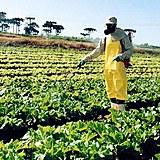 Europa exporta agrotóxicos que proíbe para uso interno e importa alimentos cultivados com estes químicos em outras regiões.