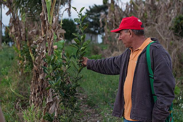 A família do agricultor Antonio Capitani está entre as 84 quepossuem hortas orgânicas certificadas no Assentamento Contestado