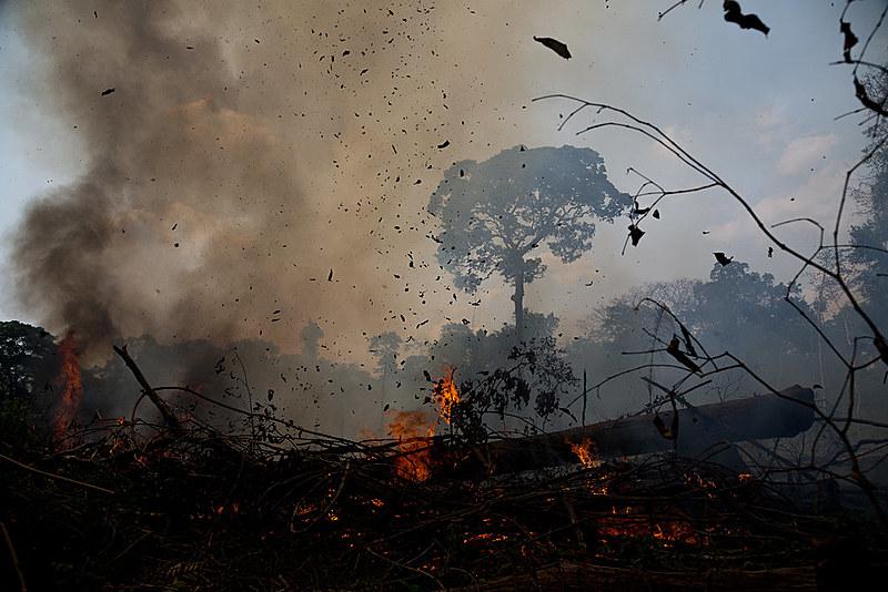 """""""A infelicitada Amazônia, em vez do preconizado paraíso tropical, tornou-se inferno cujas chamas transformam a floresta em pasto para gado"""""""