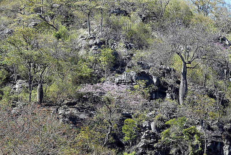 Bioma da caatinga abriga centenas de espécies e 27 milhões de brasileiros vivem na região e dependem de seus recursos naturais.