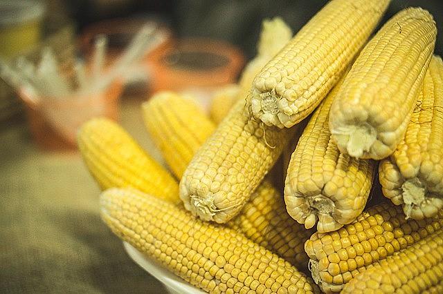 Milhos produzidos pela agricultura familiar, sem sementes transgênicas e utilização de veneno são mais saudáveis