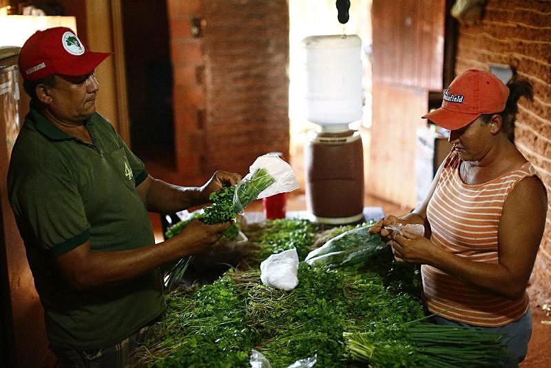 O acampamento Zé Maria, em Limoeiro do Norte (CE), é um dos poucos redutos de plantação orgânica na região
