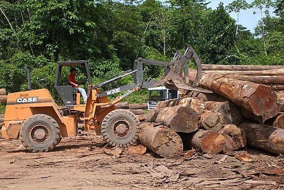 Entre agosto de 2015 e julho 2016 houve aumento de 29% do desmatamento na região amazônica