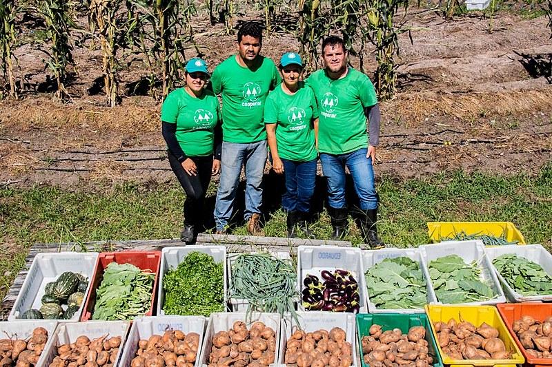 O projeto propicia que famílias produzam de 90 a 180 caixas de hortaliça por semana em uma área de 400 m²