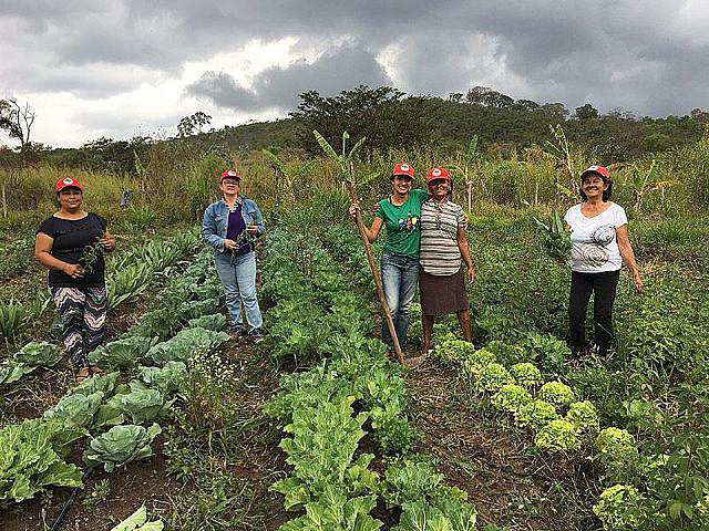 Famílias produzem comida sem o uso de agrotóxicos, de forma agroecológica ou em transição, como orienta o MST