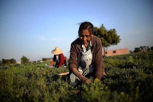 Camponeses no México sofrem com alto nível de pobreza