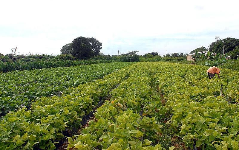 Grande parte da mão de obra paga no campo está nas propriedades até 50 hectares