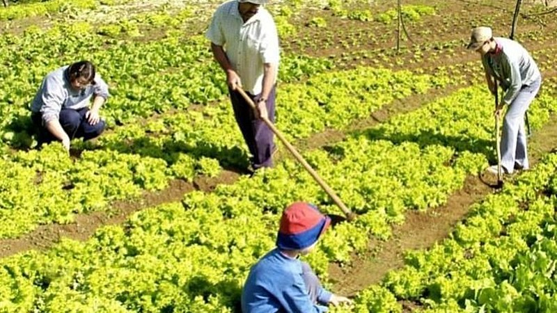 Censo apontou redução do número de propriedades de agricultura familiar entre 2006 e 2017
