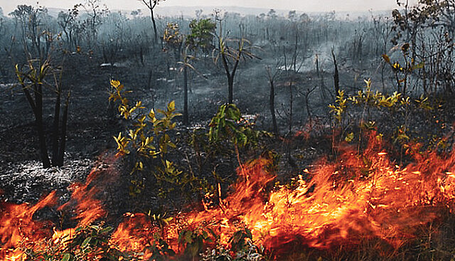 Wildfires become more common as the dry season approaches in the Amazon; ranchers and farmers use them to clear land for crops and pasture