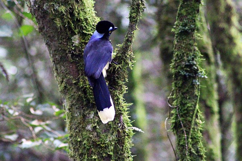 pássaro paraná ecologia