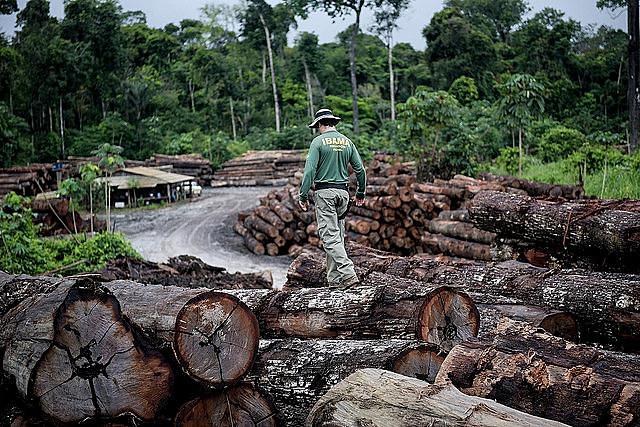Durante su campaña, el candidato ultraderechista Jair Bolsonaro afirmó que la Amazonia no pertenece al país