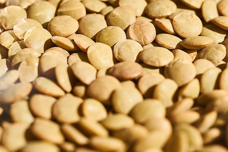 Lentilha é fonte de proteína, cálcio e ácido fólico