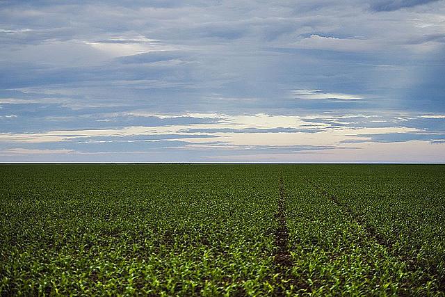 Plantação de soja no Mato Grosso; no país, 2 mil latifúndios ocupam área maior que 4 milhões de propriedades rurais