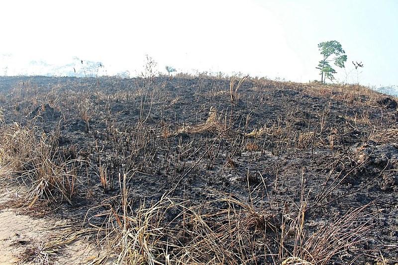 Roça de mandioca queimada por pistoleiros nesta quarta (2)