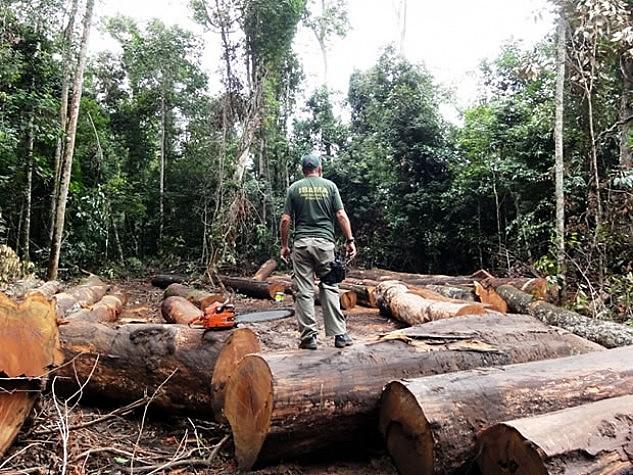 Desmatamento cresce na Amazônia