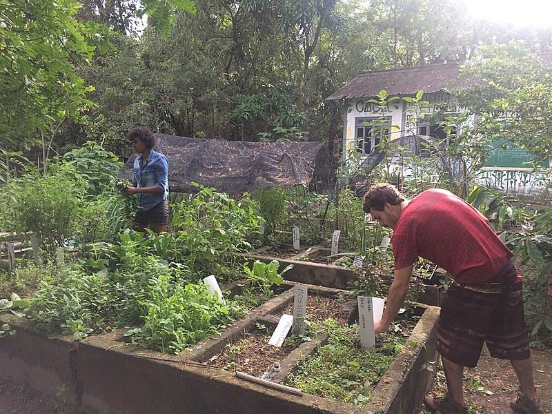Toda sexta-feira Coletivo Casa Verde realiza um mutirão aberto à toda comunidade para manejo da área.