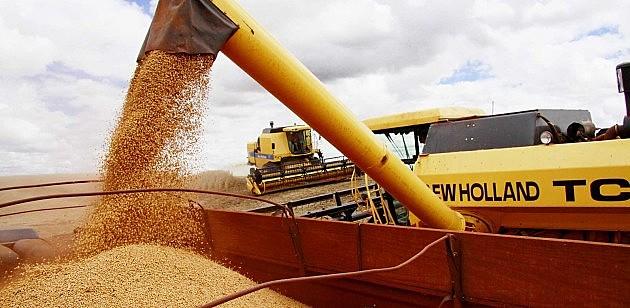 Safra de grãos de milho produzidos no Brasil