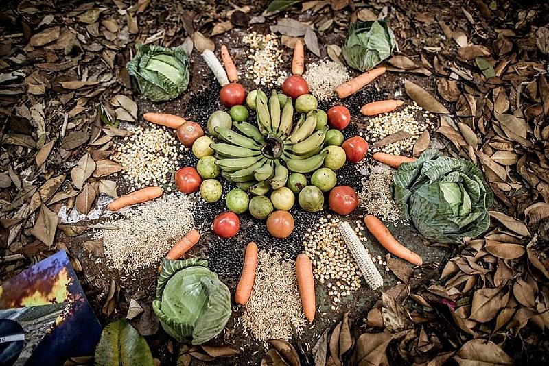 Abertura da 18ª Jornada de Agroecologia aconteceu nesta quinta-feira (29)