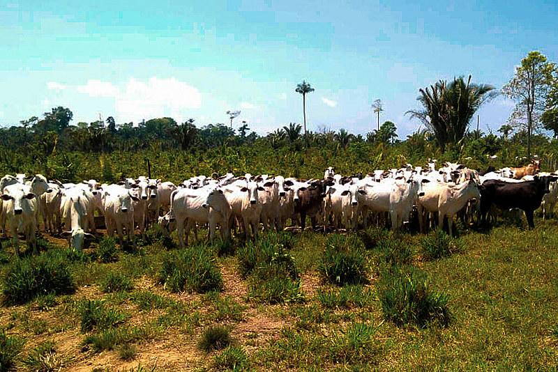 Registro de operação do Instituto Brasileiro do Meio Ambiente que apreendeu 1.388 cabeças de gado, no sudoeste do Pará