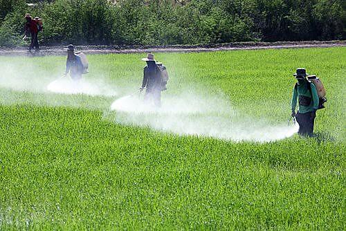Em 2016, o uso de agrotóxico no Piauí foi o equivalente a mais de três quilos por habitante