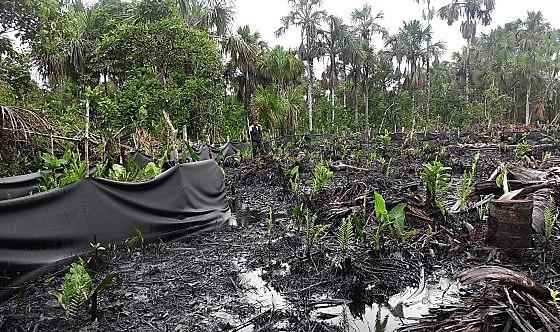 Recientemente un perdida de petroleo afectó a la Reserva Nacional Pacaya Samiria, en Peru