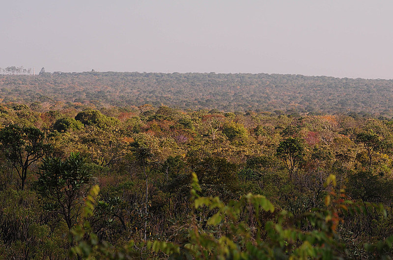 O Cerrado é hoje considerado a última fronteira agrícola do país