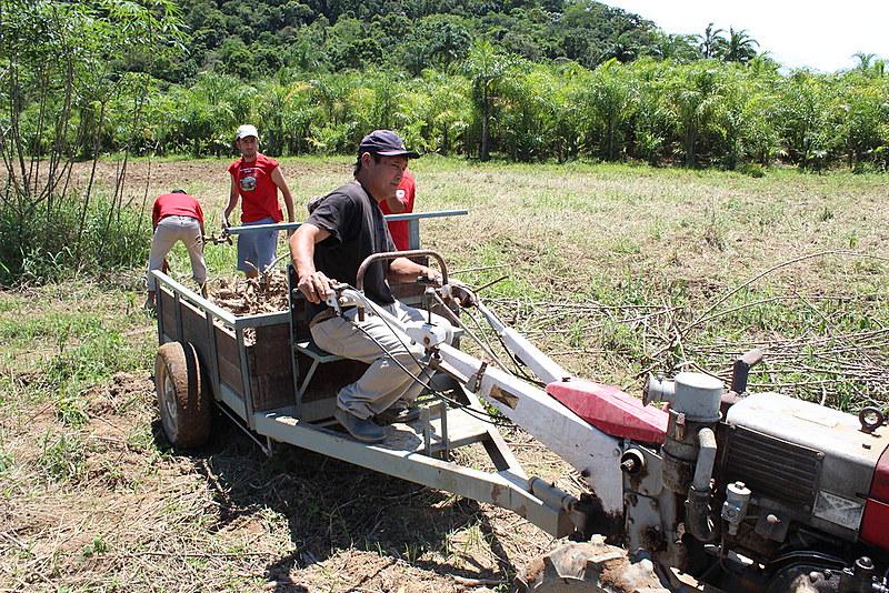 Agricultores familiares produzem alimentos sem agrotóxico