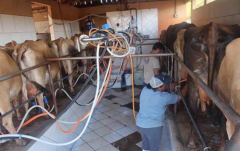 Ao lado de Santa Catarina e o Rio Grande do Sul, o Paraná está entre os maiores produtores de leite do Brasil