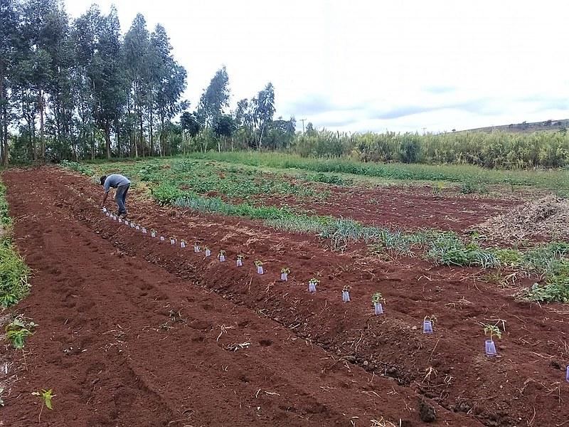 Cada família plantou 50 pés de tomate e irá receber orientação técnica para o manejo desde o plantio até o pós-colheita