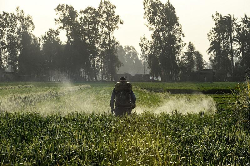 Homem espalha agrotóxicos em plantação no Egito