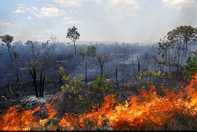 Entre os dias 1º e 9 de setembro, foram registrados7.304 focos de incêndio no cerrado