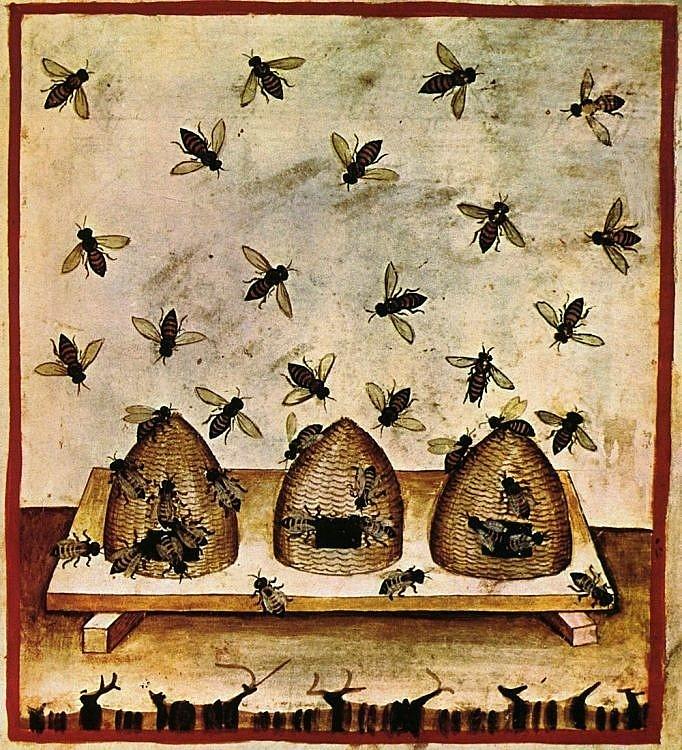 Ilustração do manuscrito do século XIV, Tacuina sanitatis