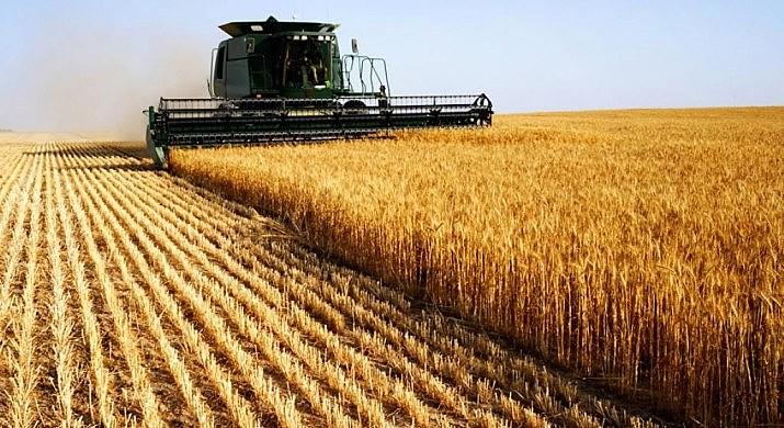 Concentração da cadeia produtiva e aumeto das monoculturas representam ameaça à soberania alimentar