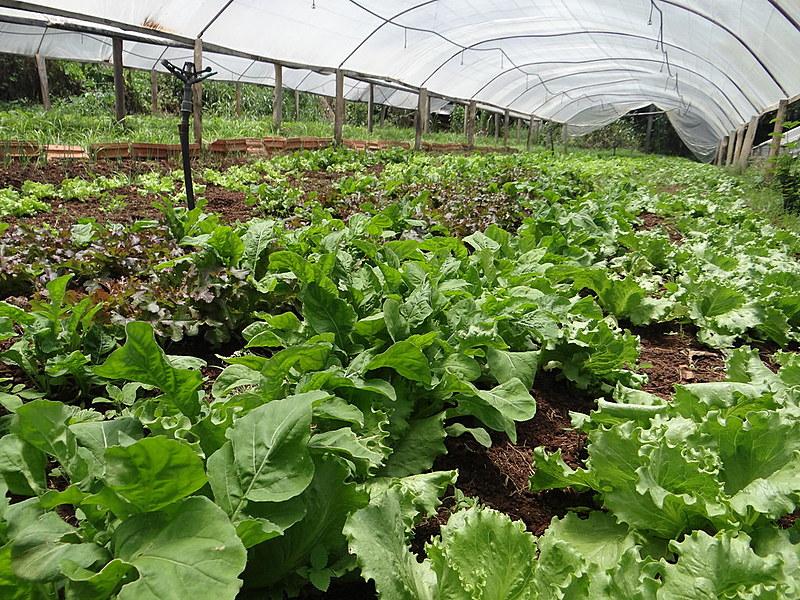 Produção dos agricultores Altamiro Lourenço e Cirlene Lourenço, no assentamento Serra Dourada