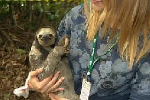 São comuns os casos de preguiças que tomam choque em fios elétricos, diz técnico do Ipaam