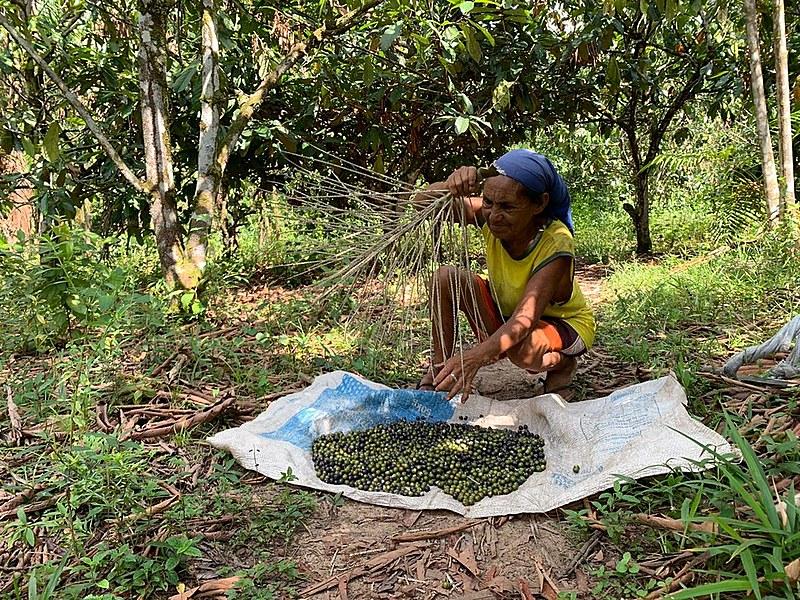 Maria Conceição é da 5ª geração do quilombo, filha de pai negro e mãe índia, ela diz que o igarapé da comunidade a ajudou a criar os filhos