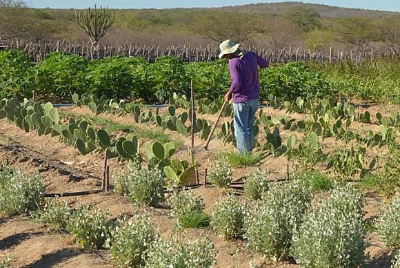 Além da MP 759, a 756 e 758 visam beneficiar o mercado de terras, especialmente a expansão das fronteiras agrícolas