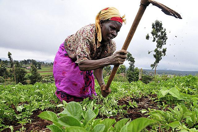 Profesora ghanesa comenta papel fundamental de las mujeres en el campo; En la foto, una trabajadora rural en Kenia