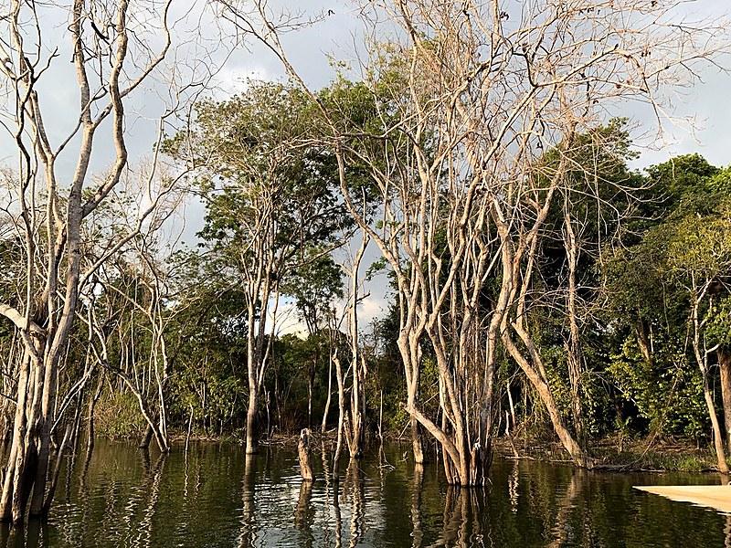 Igapó da Volta Grande: regiões amazônicas permanecem alagadas mesmo na estiagem dos rios