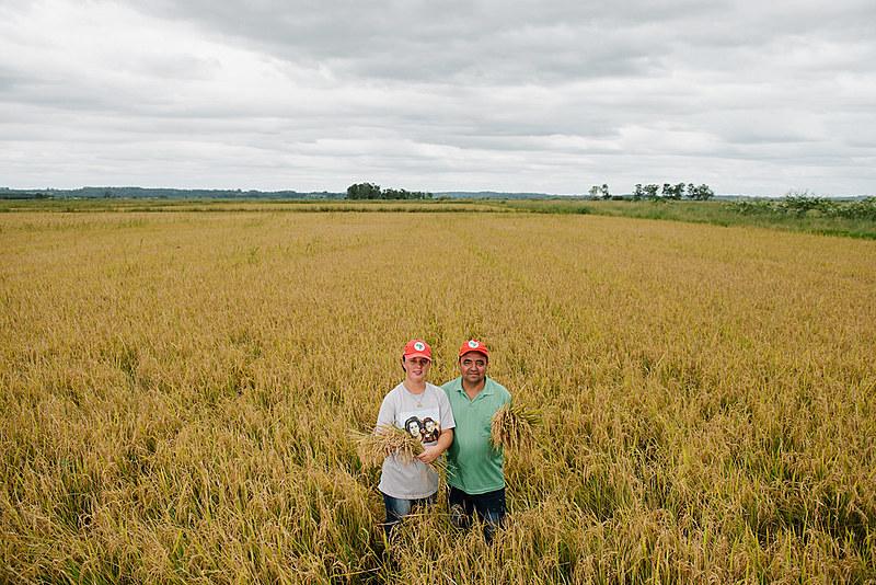 No Rio Grande do Sul, os assentamentos produzem o melhor arroz agroecológico da América latina