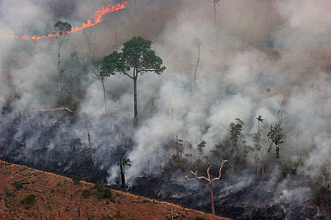Frente Parlamentar da Agropecuária, entre outras entidades ruralistas, querem banir de livros e apostilas qualquer menção a temas como desmatamento ilegal e queimadas de florestas