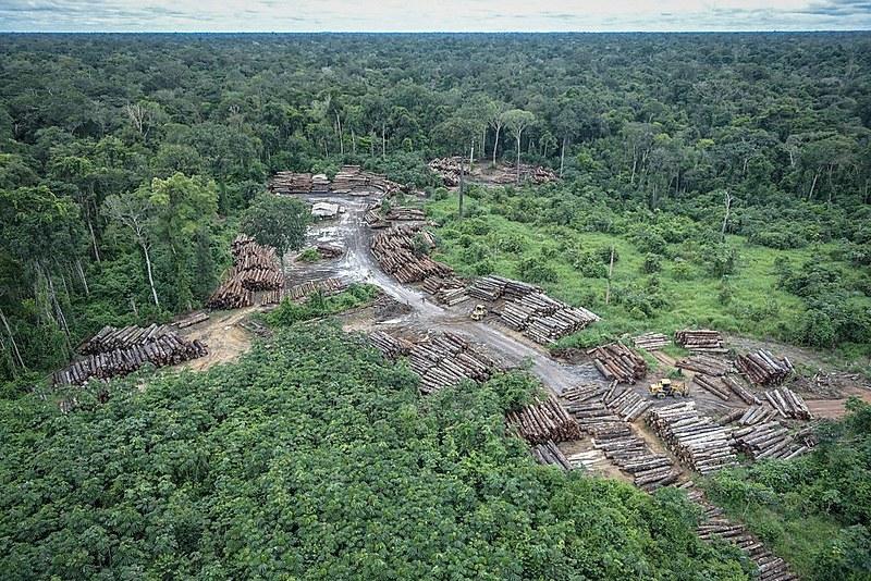 Aumento da degradação ambiental faz com que florestas tropicais não consigam mais contrabalançar as emissões de carbono