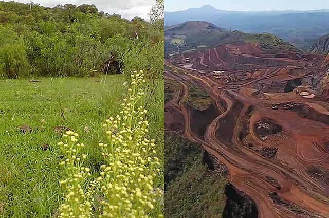 Mineração avança sobre agricultura orgânica no RS