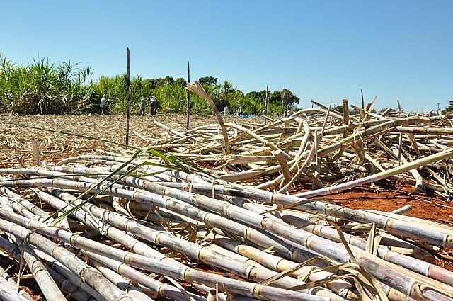 Em 8 de junho passado, CTNBio aprovou a liberação comercial da cana de açúcar modificada geneticamente