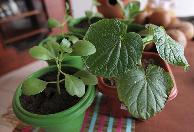 Desde a antiguidade, as plantas medicinais ajudam na cura de doenças