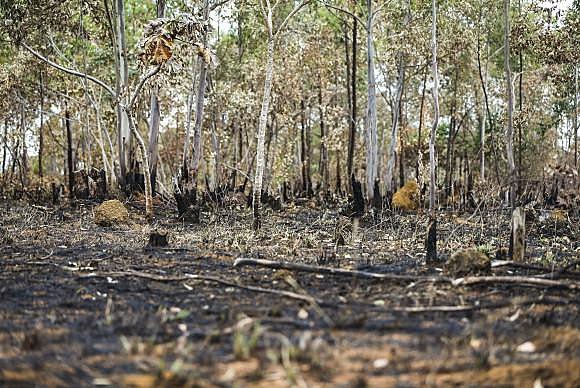 O ritmo de desmatamento do cerrado foi cinco vezes mais rápido que o medido na Amazônia