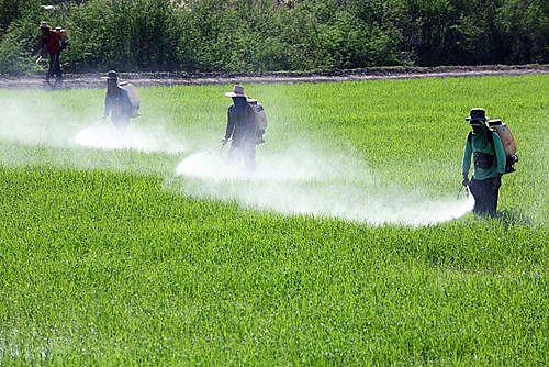 PL do Veneno pretende revogar as Leis nº 7.802/1989 e 9.974/2000, que regulam o processo de liberação e uso de agrotóxicos